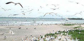 Playa Cunagua