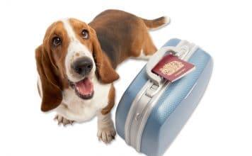 Viajar con animales a Cuba